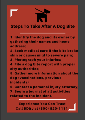 Steps to Take After a Dog Bite